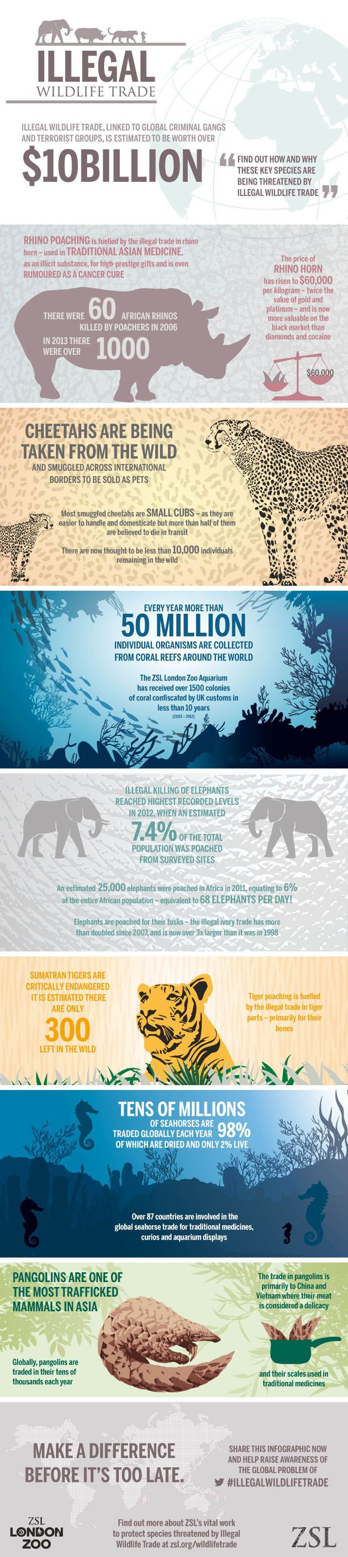 Check out this infographic on the dire state of the illegal wildlife trade and get inspired to help.