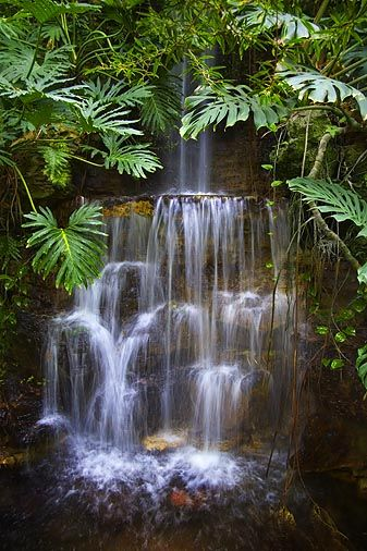 The rainforest. Google Image Result for http://www.uvm.edu/~inquiryb/webquest/sp09/eeckstei/RainforestWaterfall.jpg