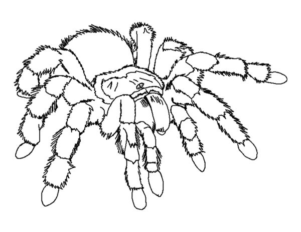 spider color page animal coloring pages color plate coloring sheetprintable coloring