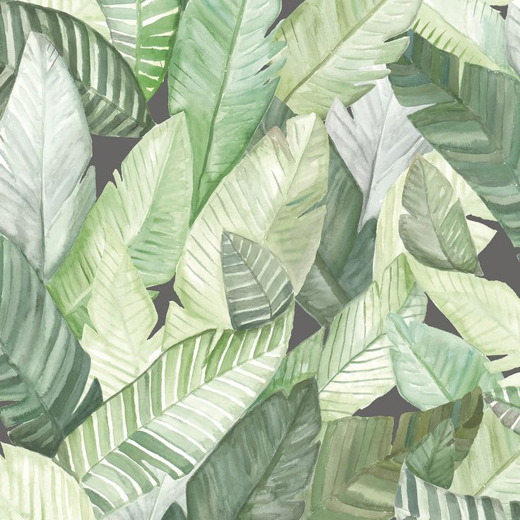 Banano is a fun, contemporary take wallpaper featuring huge painted banana palm leaves...perfect for the current botanical trend. Available in lead or green colour ways. The pattern repeat for this design is 61cm - If you need help working out how...
