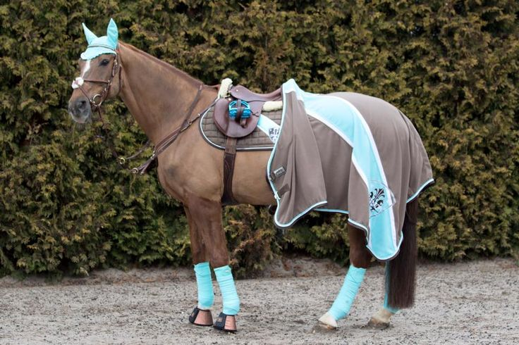 OMG!!! My ABSOLUTE DREAM HORSE AND TACK