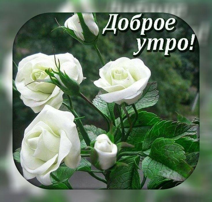 Красивая открытка с розами с добрым утром, для