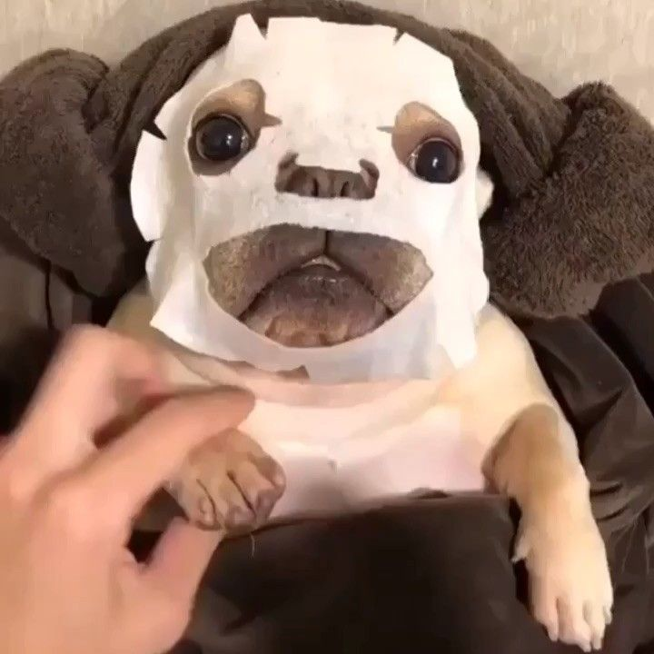 Torontofrenchie What Self Care Looks Like