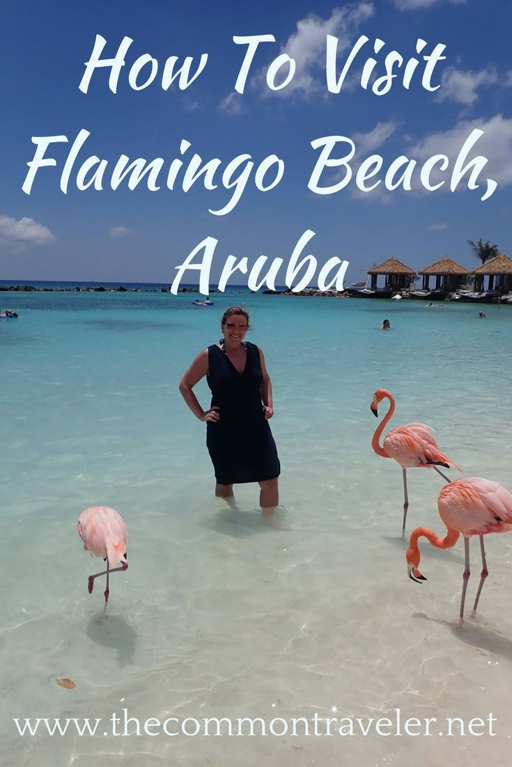 Visiting Flamingo Beach in Aruba 599 best