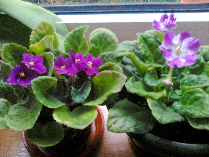 Adriana  Hobby: Plantele de apartament