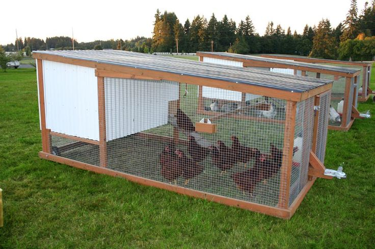 Mobile Chickens - Raise Organic Chicken with your own Free Range chicken Coop