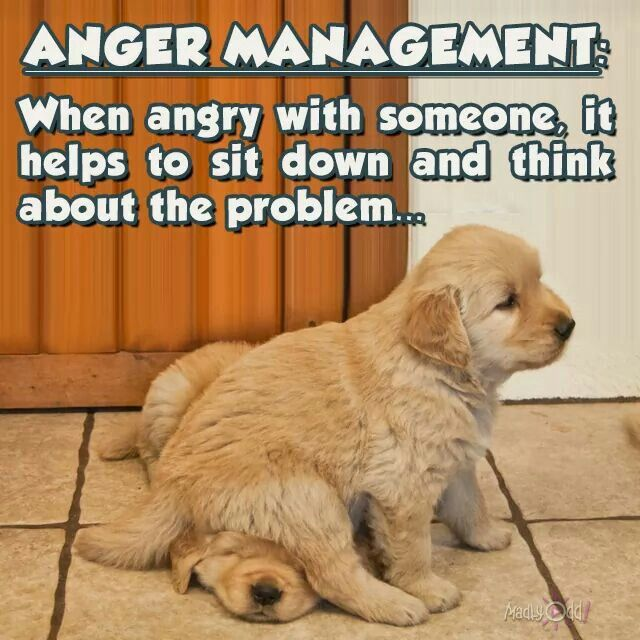 Anger Problems Quotes And Pictures: 300 Best Images About ANIMALS