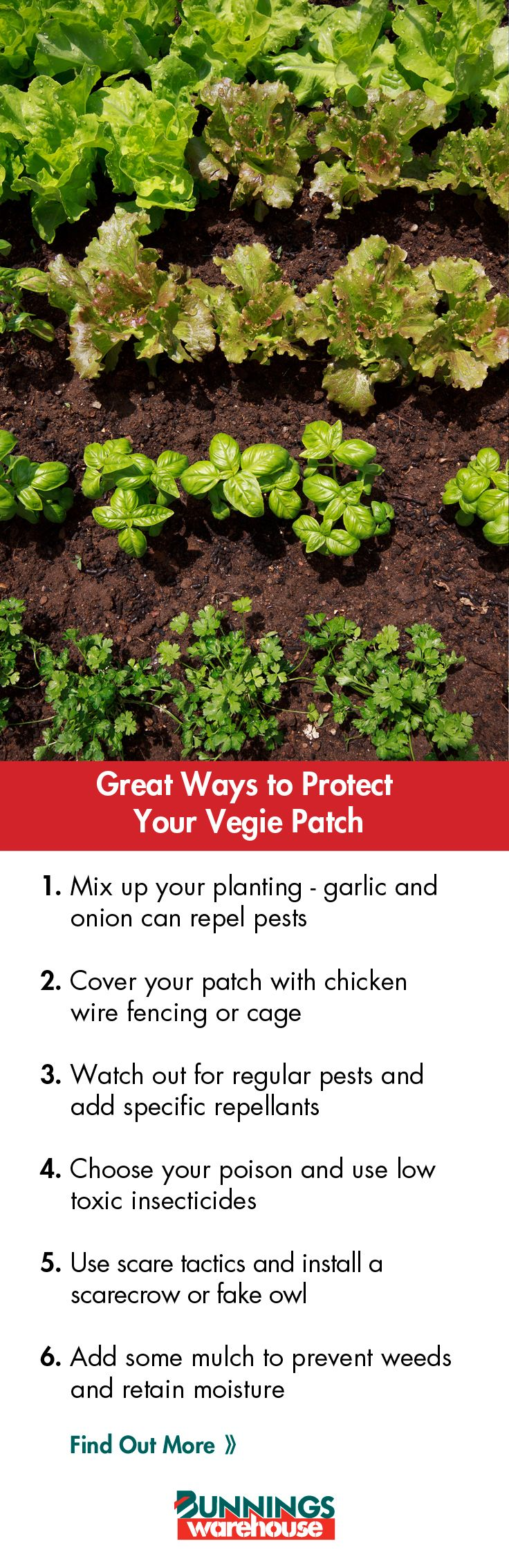 Here's our handy guide on protecting your #vegiegarden this #Autumn