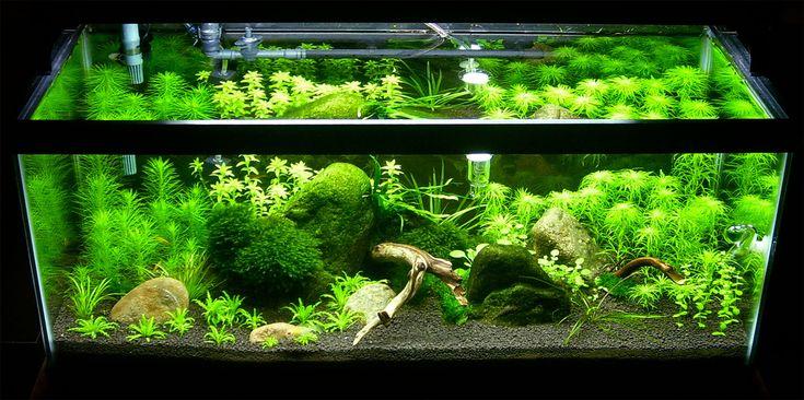 10 gallon aquarium ideas