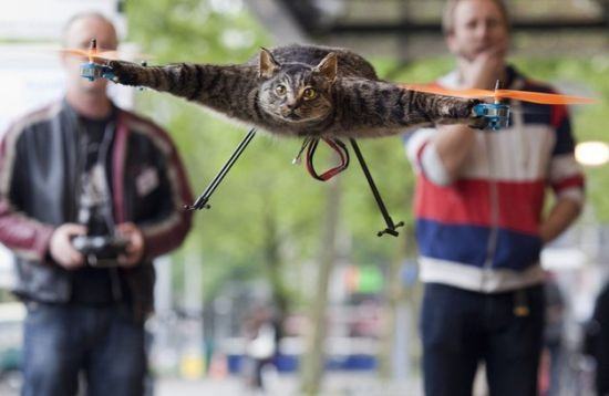 Just plain strange!     Dutch artist turns his dead cat into the purrfect quadrotor