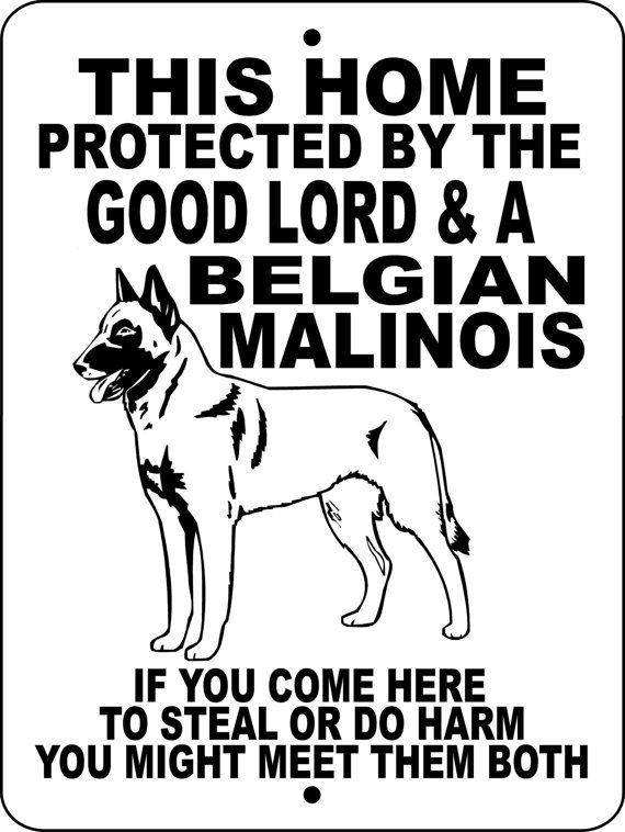 Belgian Malinois Dog Sign @Kay Richards Richards Richards-Lynn Cavs Royer  Just randomly found this and think it's appropriate for Phoenix. Unlike Phoenix, a burglar wouldn't arise from thosE ashes. Lol