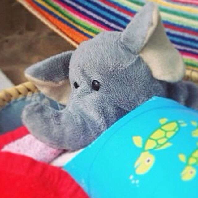 YAY! Elephant was reunited! ---  Lost on 18 Sep. 2015 @ Manchester Airport Terminal 3. We've lost my sons cuddly elephant. She is grey and has a ladybird bobble around her ear. She was last seen with Noah in baggage collection at approximately 11.30pm. Visit: https://whiteboomerang.com/lostteddy/msg/dfv62l (Posted by Nicola on 20 Sep. 2015)