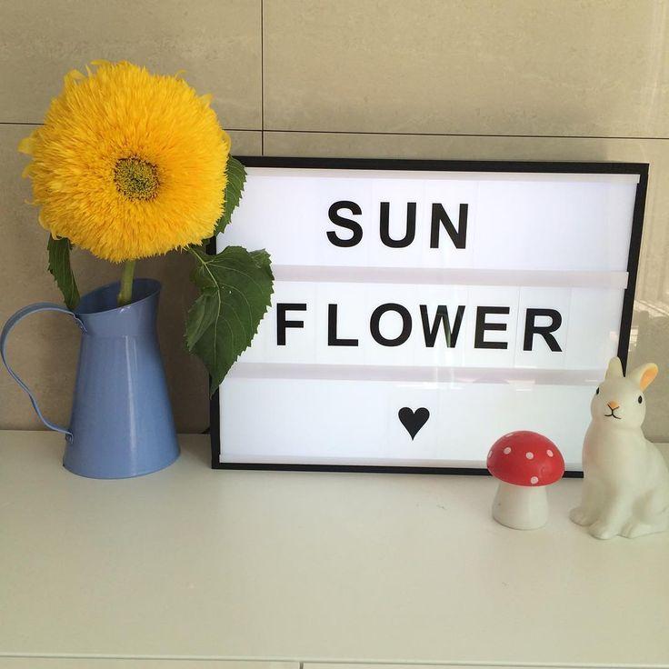 #sunflower #집스타그램 #홈 #home #라이팅박스 #lightingbox #돼랑돼랑 #pureblossomflower
