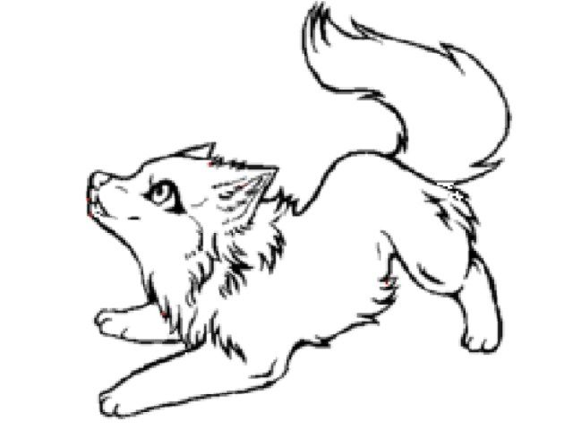 21 Excellent Image Of Wolf Coloring Pages Birijus Com Cute Wolf Drawings Wolf Colors Wolf Sketch