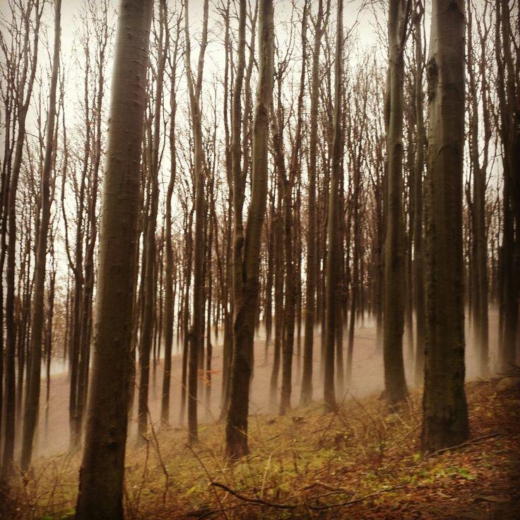 Foggy forest, Mátra mountain,  Hungary (photo by Leni Lenart)