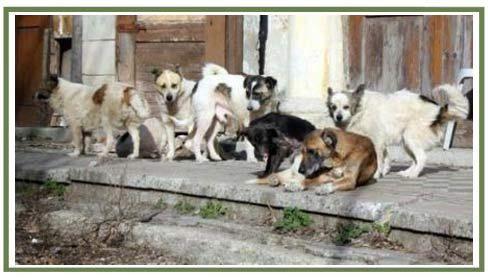 De ce un om este infinit mai important decât un câine …