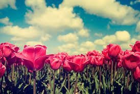 Image result for flowers tumblr