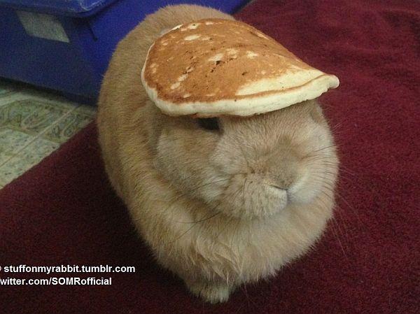 パンケーキやバナナを頭にのせたウサギ「Vinnie」がかわいいと Twitter や Tumblr で話題に