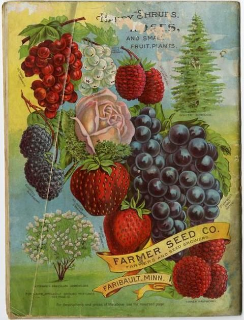 The colorful back cover of the 1904 Farmer Seed & Nursery catalog featured images of fruits, flowers, shrubs, and even a white spruce.  It seems there was no part of a farmstead that Farmer Seed couldn't provide seeds or nursery stock for! Farmer Seed & Nursery originated in Faribault, MN in 1888. Andersen Horticultural Library hosts a collection of vintage Farmer Seed & Nursery catalogs.