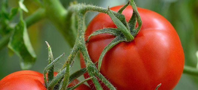 Βιολογικά τρόφιμα: Γιατί να τα επιλέξετε