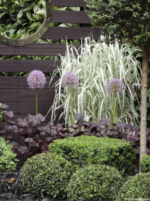 garden, chelsea flower show 2010 box hedging, purple allium,  ornamental grasses