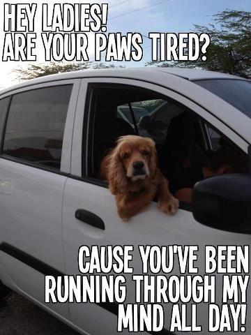 Dog pick up line .....Hi Ladies, | Captions - Sometimes ...