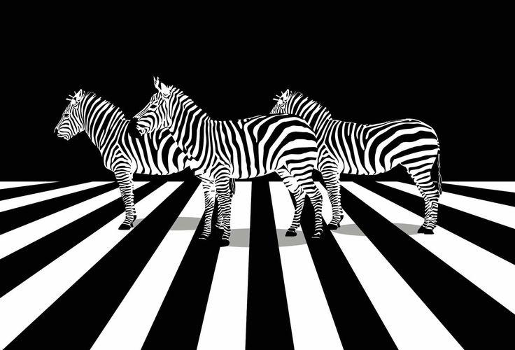 PASSAGE PIETON - Tableau toile imprimée zèbres noir et blanc