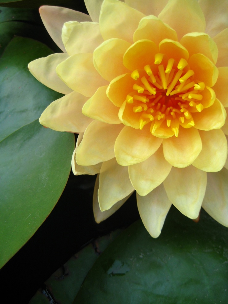 Closer to the lovely water lilly by Churaipon C. Klaijumlang
