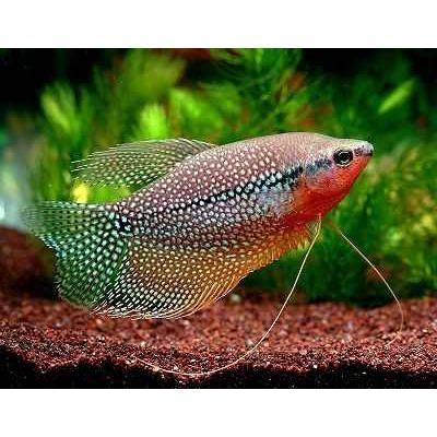 17 mejores ideas sobre peces ex ticos en pinterest peces - Peces tropicales fotos ...