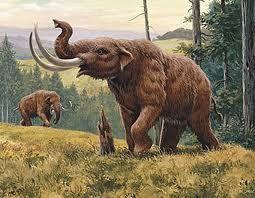 """Mastodonte significa """"pezón-diente""""."""