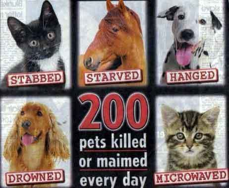 Some of the statistics regarding animal cruelty and the forms it takes. What makes a person do these things? I just can't understand the sickness.....