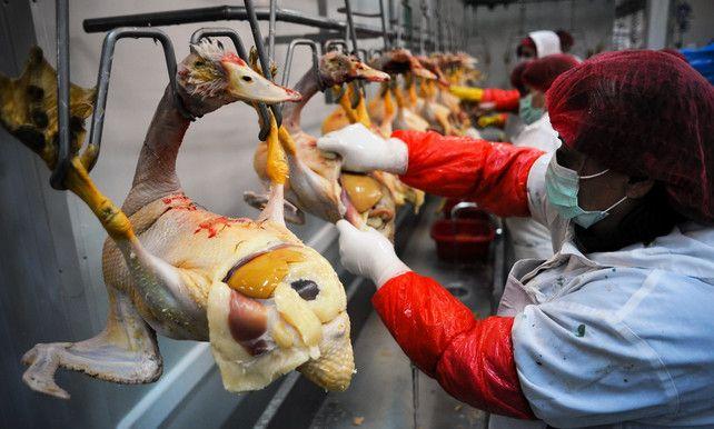 Belgen 2e grootste afnemer Franse 'foie gras'| Economie De Morgen