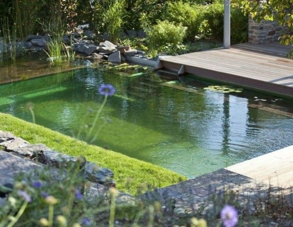 79 best images about piscine naturelle on pinterest for Piscine naturelle