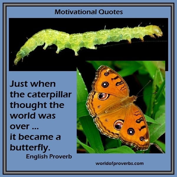 World of Proverbs - Famous Quotes: Just when the caterpillar thought the world was over, it became a butterfly. ~ English Proverb [19620]