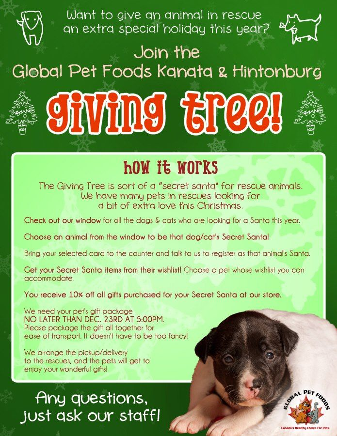 The Global Pet Foods stores in Kanata and Hintonburg (Ottawa region, Ontario)  are hosting a Giving Tree fundraiser! The flyer has all the details.  Be sure to visit these two stores to check out all of the available dogs & cats who need a holiday Secret Santa!  Thank you!