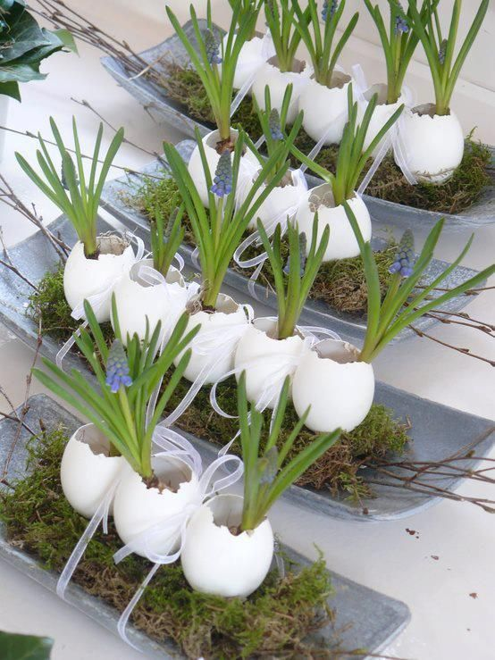 Fun Easter activity - grow plants from an egg shell. Add soil, water, and seeds. Set in front of window and let it grow!