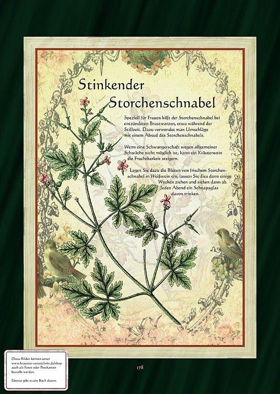 Storchenschnabel (Geranium)