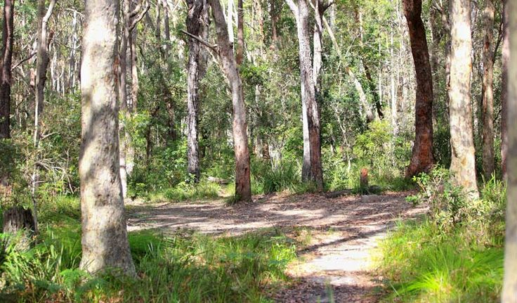 Meroo Head campground, Meroo National Park. No bookings. Short walk from car to camping. 150m to beach.