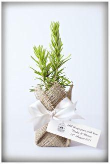 Plant Varieties - Flourish Bomboniere