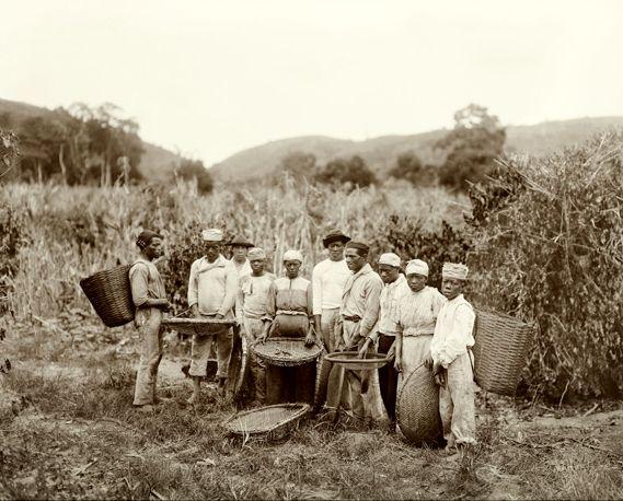 Escravos em uma plantação de café por volta de 1882 - Por Marc Ferrez.