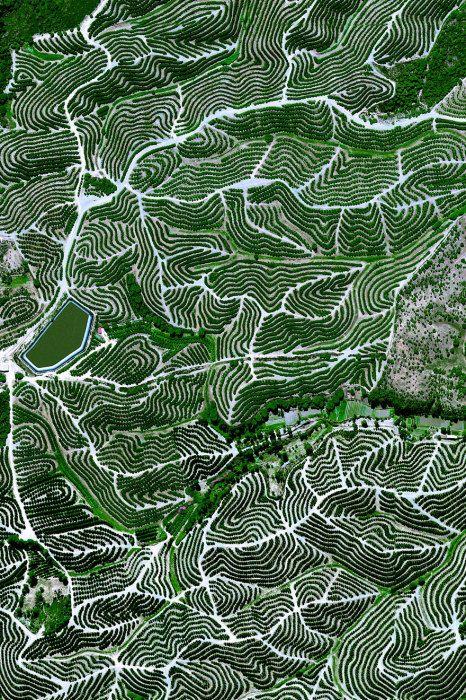 Фруктовые деревья культивируют на холмах Уэльва, Испания.  Фруктовые сады, Уэльва, Испания