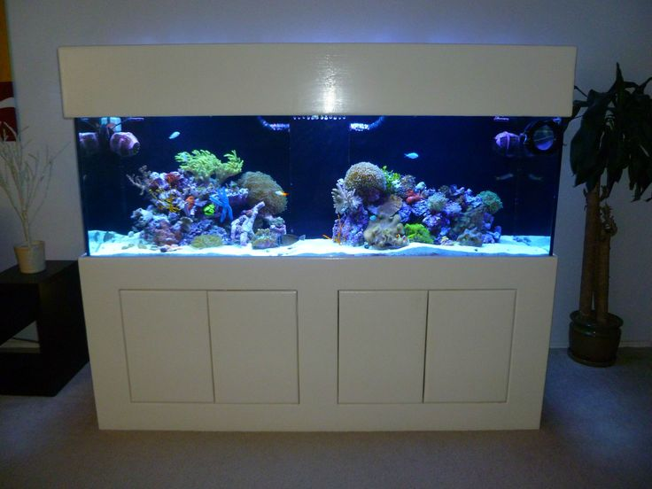 17 best images about reef aquascapes on pinterest for 180 gallon fish tank