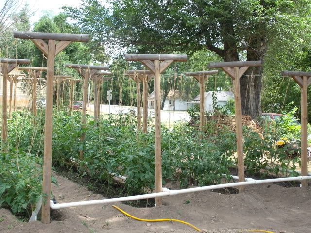 any pics for rights page 51 forums - Garden Trellises