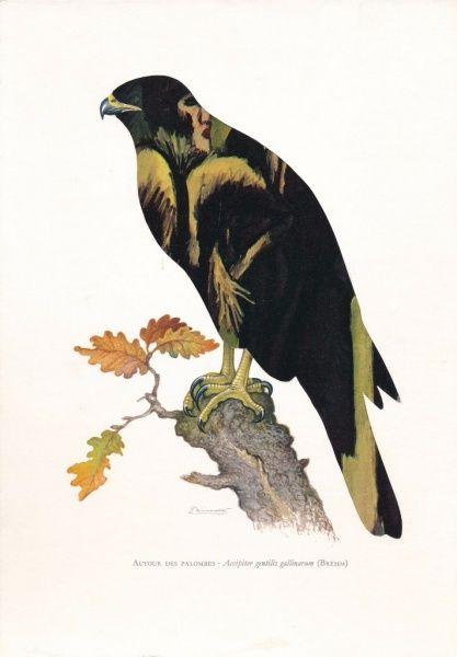 Jiří Kolář Jestřáb lesní / E. L. Kirchner