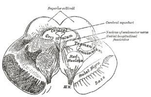 ventral tegmental  area