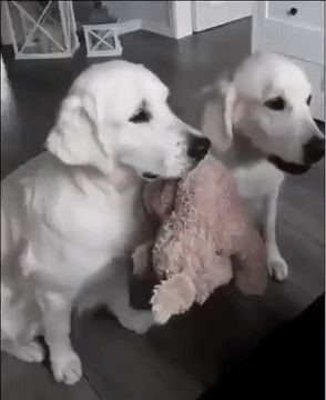 [GIF] Hold the toy, now it's my turn to eat