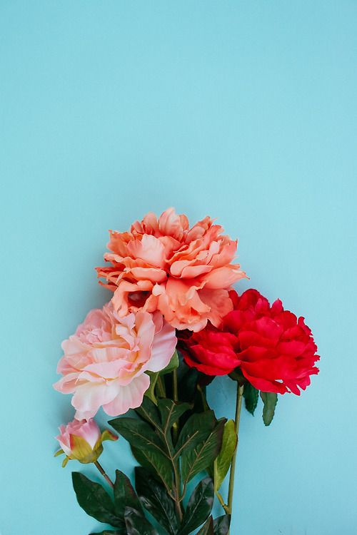 Sunday Bouquet: Peonies against Blue by Kayla Snell