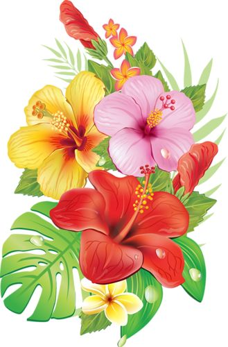Tropical Flower On Koh Samui Thailand: CLIP ART - SPRING - CLIPART