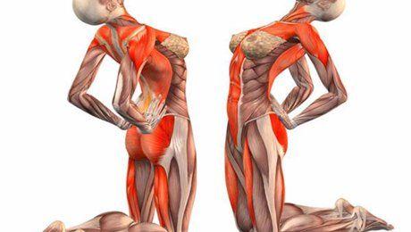 Упражнения, развивающие тонкие мышечные волокна позвоночного столба