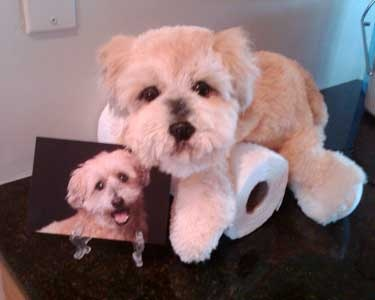 """Beloved Pets"" Now you can have create a stuffed animal to look like your furry friend and have some of your pet's ashes placed inside a specially created pouch. http://www.belovedpetsbygina.com/photoalbums.html"